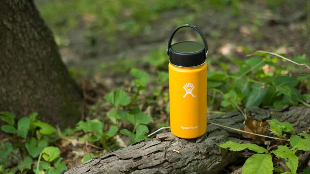 Hydro Flask bottle on a tree branch
